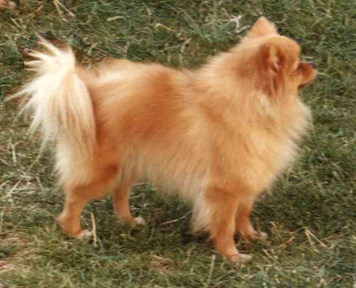 Cane adulto piccola taglia ciotolefelici vendita online